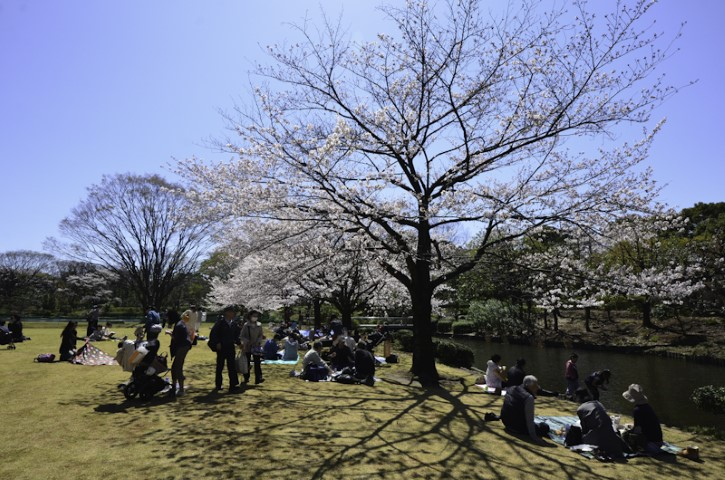 Group blossom party, Tokyo