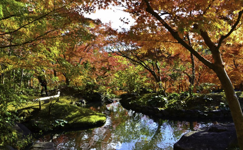 Beautiful crimson leaf tour in Japan