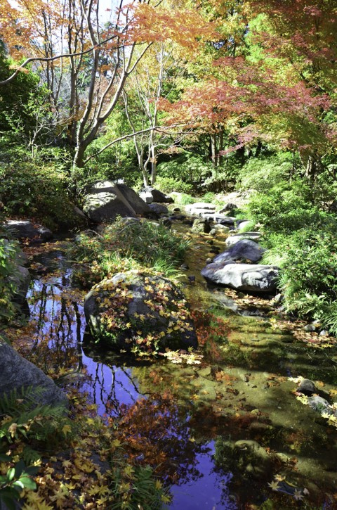 Japanese gardens in autumn