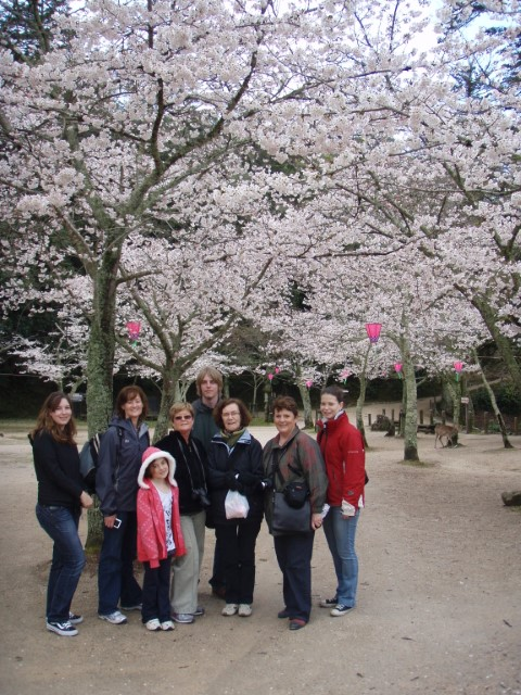 Cherry Trees om Miyajima